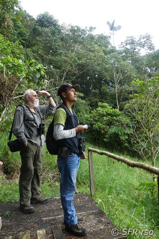 Birding im Nationalpark Sumaco in Ecuador
